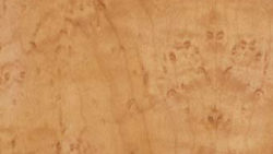 3001 Honey Birdseye Maple - Lamin-Art