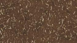 8009 Java - Lamin-Art