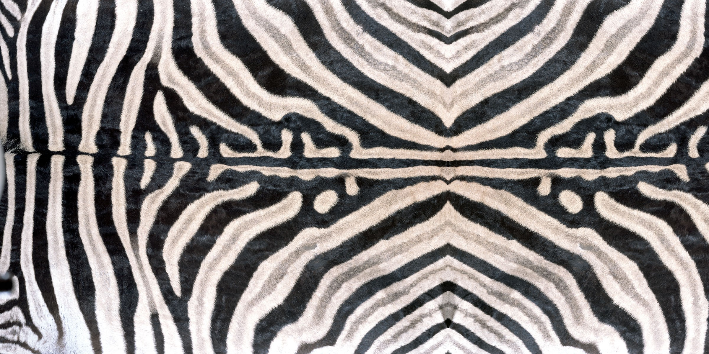 Y0062 Zebra - Wilsonart